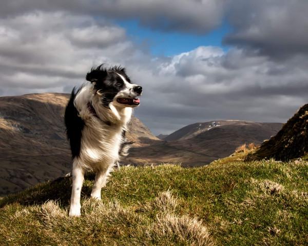 Dog Friendly Hotels Scotland Dog Friendly Breaks Scotland